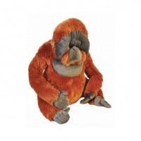 Orangutan, 75 cm